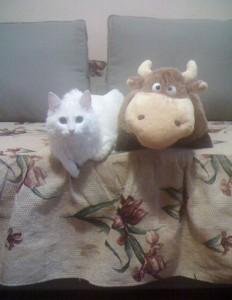 Гречка и корова