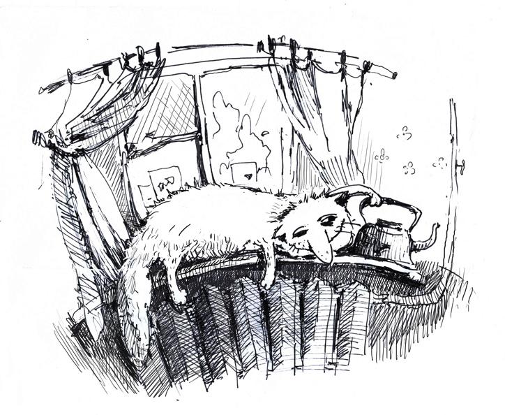 тяжелые будни кошачей жизни....